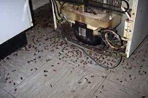 Опасность тараканов