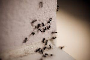 Особенности муравьев