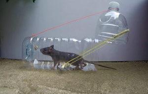 Ловим крысу