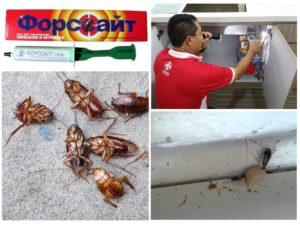 Форсайт от тараканов