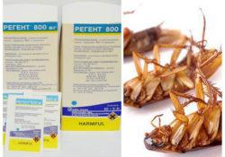 Препарат Регент от тараканов