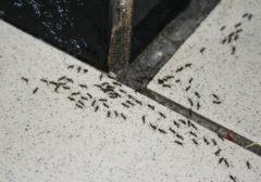 Как избавиться от муравьев на кухне: действенные способы и средства